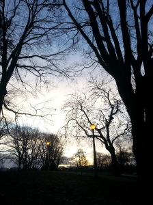 This is my park -- I took this during my walk this afternoon, just before the sun set.