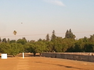 A hot air balloon floating east over woods and a palm tree in California.
